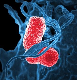 bacteria-811861__340